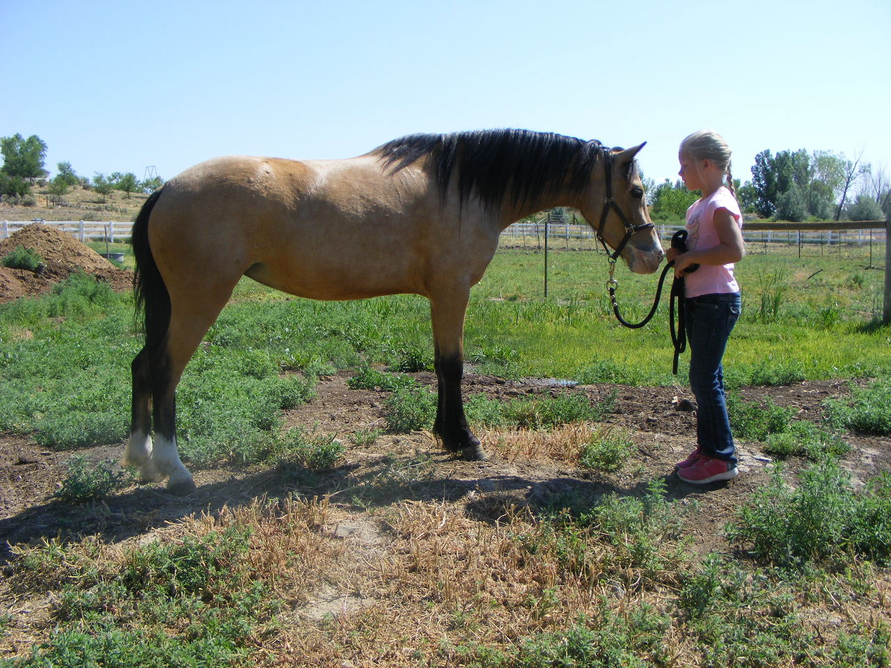 The Promise Emma - Maiden Mare for Sale