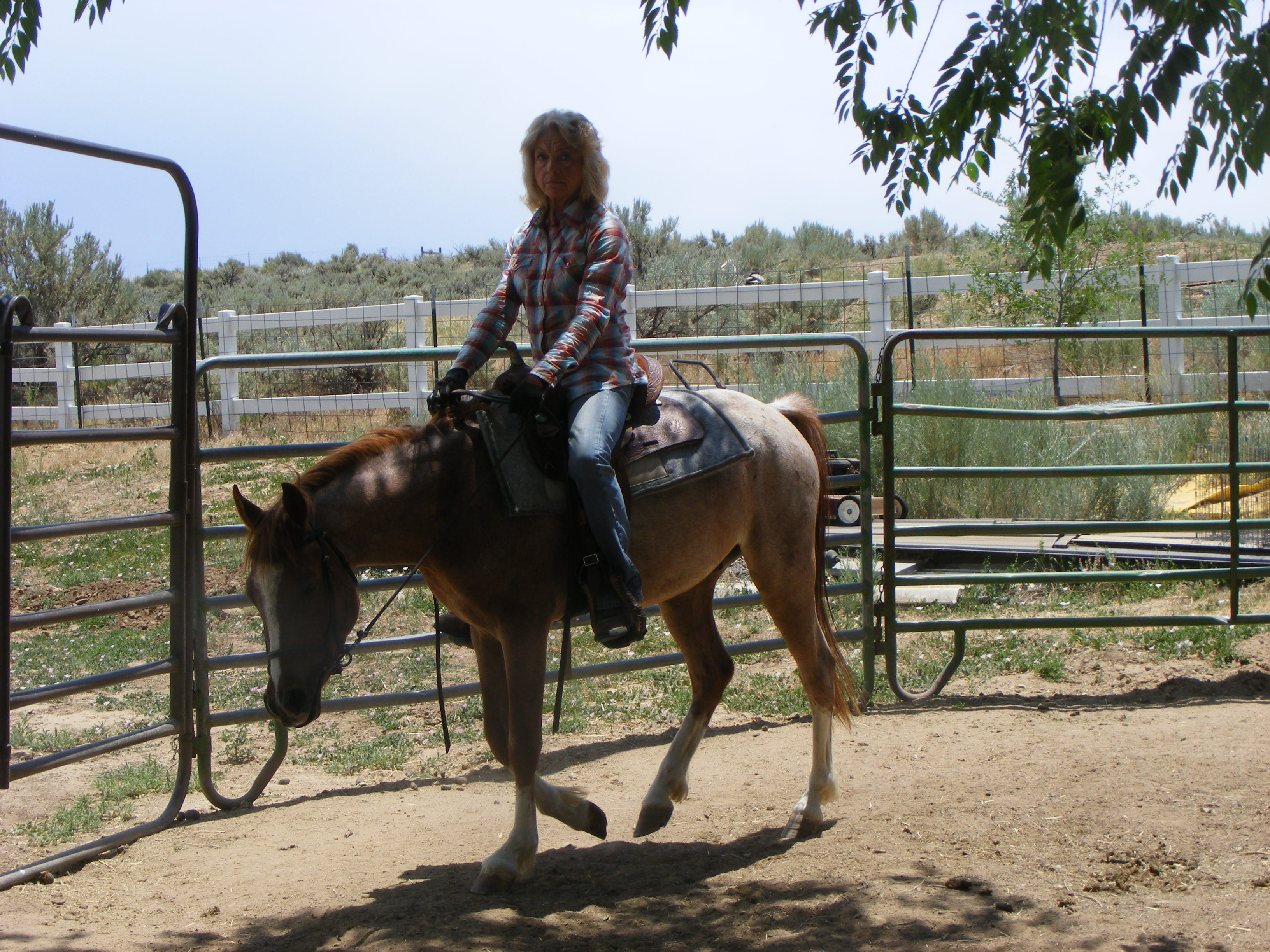 Weehaven's Impulsive Spark Gelding For Sale 03